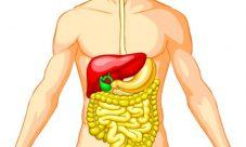 Dónde se encuentra el sistema digestivo
