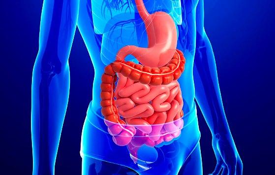 Imágenes del sistema digestivo 3d