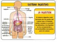 Imágenes del sistema digestivo para niños