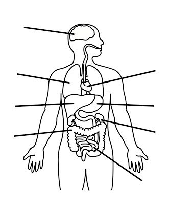 Imágenes Del Sistema Digestivo Sistema Digestivo