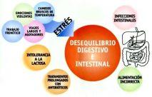 Cosas que dañan el sistema digestivo