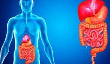 Higiene del sistema digestivo