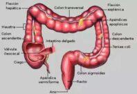 Características del intestino grueso