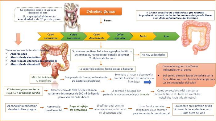 Fisiología del intestino grueso