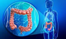 Función del intestino grueso