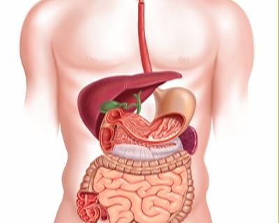 ¿Cómo mejorar la digestión?