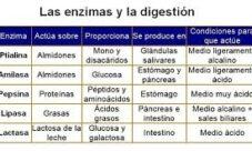 Enzimas que participan en la digestión